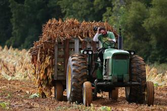 Analiză: Aproape jumătate dintre românii care trăiesc din cultivarea pământului sunt trecuţi de 50 de ani