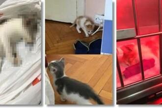 Un tânăr din Timișoara a fost trimis în judecată pentru că a omorât pisicile pe care le adoptase