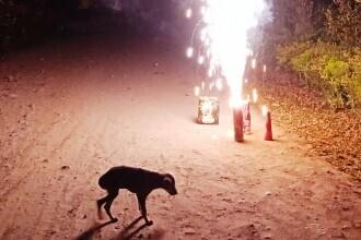Un câine a murit la Botoșani, îngrozit de zgomotele petardelor de Revelion. De ce sunt mai afectate animalele