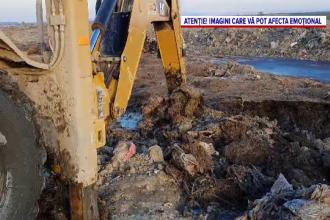 Dezastru ecologic în localitatea Smârdan, județul Tulcea. Mii de leșuri de ovine ar fi îngropate