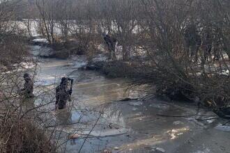 Mister în Olt: un cioban dispărut și 70 de oi moarte într-un pârâu. Unde era bărbatul în timp ce poliția îl căuta