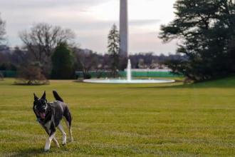 Ce se întâmplă cu unul dintre câinii lui Joe Biden, care a mușcat un agent de securitate la Casa Albă
