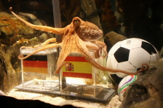 Incredibila caracatita prezicatoare ar putea ajunge pe gratar sau marinata