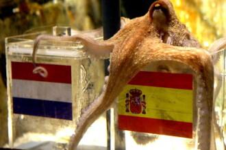 Caracatita Paul a prezis: Spania e campioana mondiala, Germania ia bronzul