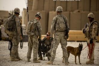 Cel mai bun prieten al soldatului american: cainele vagabond