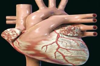 Descoperiri importante in medicina. Vom putea trata bolile de inima mai repede si mai bine