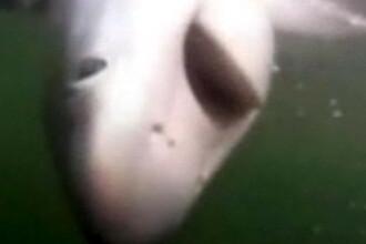 A pescuit un rechin si s-a luptat cu el 30 de minute pana l-a urcat in barca. VIDEO