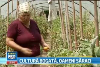 Drama taranului roman. Cum isi iroseste Romania cea mai buna recolta agricola din ultimii 10 ani