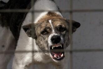 Cosmarul unei menajere romance din Italia: a fost inchisa luni intregi intr-o casa cu 26 de caini care o muscau