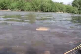 Anaconda de Romania: Trei sate din Bistrita traiesc cu spaima unui sarpe urias