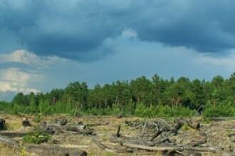 Copacii radioactivi din Cernobil ameninta Europa.Ce au gasit la 25 de ani de la explozia reactorului