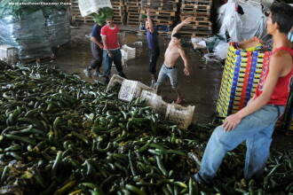 Campanie Pro TV. Traseul legumelor pentru care noi platim si DE 10 ORI mai mult decat pretul real