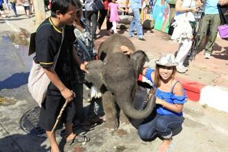 Chinurile inimaginabile prin care trec elefantii din Thailanda, inainte de a fi expusi publicului