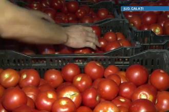 Agri-cultura dezastrului. Cum a ajuns super productia de rosii a Romaniei sa putrezeasca pe camp