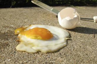 5 moduri in care poti folosi cojile de ou