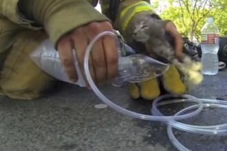 Un pompier salveaza dintr-o casa in flacari o pisica si o readuce la viata cu masca de oxigen. VIDEO