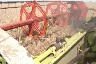 Paradoxul agriculturii in Romania: avem productie record, insa fermierii nu isi acopera investitia