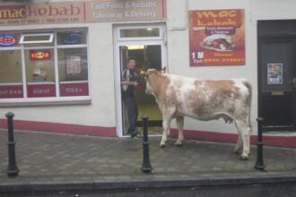 Un barbat din Irlanda a iesit cu vaca in oras. Locul unde si-a dus animalul a starnit hohote de ras pe internet