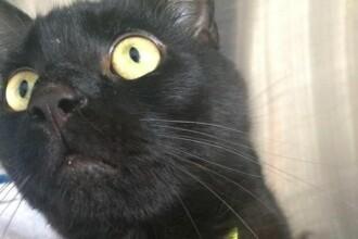 O pisica data disparuta a fost gasita la 322 kilometri distanta de casa, intr-un hotel londonez