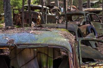 Masinile blocate in trafic de 70 de ani. Care e explicatia pentru imaginile misterioase surprinse intr-o padure din Belgia