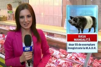 Bani pentru rasele romanesti. Fermierii care au in curte oi merinos, vaci din rasa sura sau porci mangalita, ajutati de UE