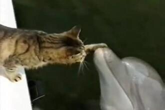 Motanul Arthur se imprieteneste si se joaca cu delfinii din ocean. VIDEO