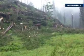 55 de hectare de dezastru natural. O furtuna pe care martorii au numit-o tornada a distrus o padure din judetul Suceava