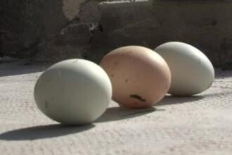 Gaina cu oua de aur din povesti face in zilele noastre oua verzi. Ce le face sa fie mult mai sanatoase decat cele clasice