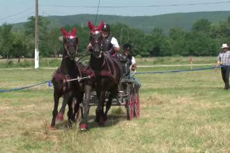 Campionat de atelaje la Bistrita-Nasaud. Cei mai scumpi cai din Romania s-au intrecut in curse cu obstacole