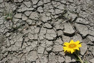 Seceta, zone aride in locul campiilor si veri mai calde. Efectele incalzirii globale asupra Romaniei in urmatorii ani