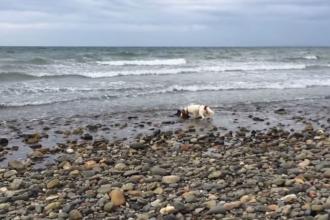 Si-a auzit cainele latrand pe plaja, dar nu se astepta sa descopere asa ceva. Ce a vazut cand s-a apropiat: VIDEO