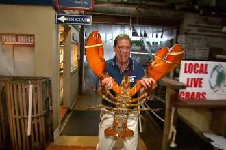 Un homar urias a devenit mascota unui restaurant din New York: