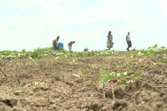 Locul din Romania in care n-a mai cazut o picatura de ploaie de cateva luni. Agricultorii vorbesc despre un blestem