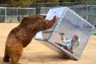 Momentul in care un urs ataca o femeie, inchisa intr-o cutie transparenta. Concursul bizar, inventat de japonezi. VIDEO