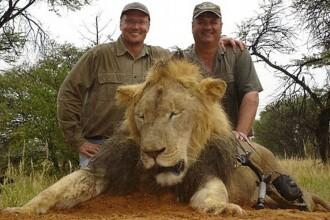 Scandal international dupa uciderea leului simbol al statului Zimbabwe. Cine este de fapt vanatorul