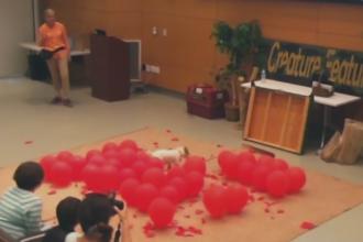 Un caine a ajuns in Cartea Recordurilor datorita vitezei la spart baloane. In cate secunde sparge 100 de bucati. VIDEO