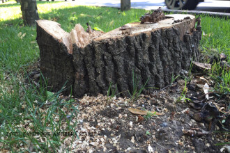 """USR: """"În starea de urgență s-a furat mai mult lemn"""""""