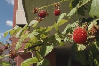 Agricultura la scara mica. Orasenii au inceput sa planteze legume in gradinile din jurul blocurilor