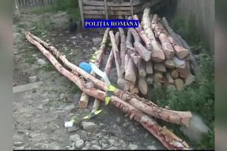 Raid al politiei la locuintele unor persoane suspectate de furt de lemne. Cum ar fi actionat suspectii ca sa nu fie prinsi