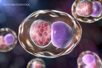 Infectiile care se trateaza obligatoriu in cuplu. Daca nu sunt descoperite la timp, pot duce la infertilitate ireversibila