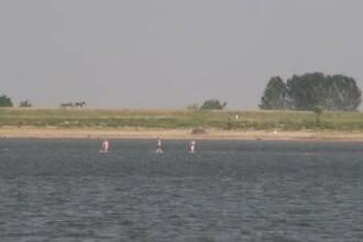 Apa Dunarii s-a evaporat, iar nivelul a scazut cu 6 centimetri. Pe mijlocul fluviului au aparut insulite