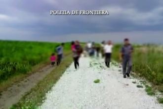 21 de migranti irakieni prinsi intr-un lan de porumb, la frontiera, in Arad. Unde incercau sa ajunga