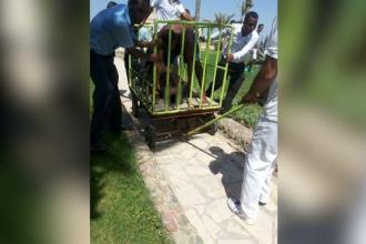 Cele doua turiste injunghiate mortal in Egipt sunt din Germania.