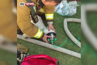 Catel din SUA, salvat in ultima clipa dintr-o casa cuprinsa de flacari. Pompierii l-au resuscitat
