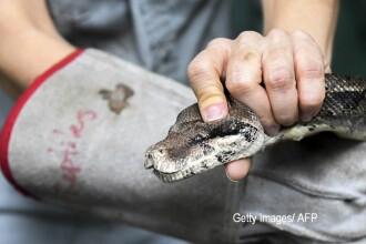 Bărbat din Piatra Neamţ, muşcat de un şarpe boa în apartamentul său