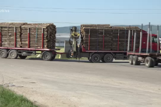 Veste proastă pentru români. Prețul lemnelor de foc ar putea crește din iarnă