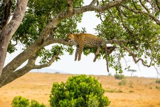 Leopard împușcat de autorități, după ce a ucis 21 de persoane