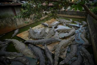 Țara unde 292 de crocodili de la o fermă au fost uciși. Paguba financiară este uriașă