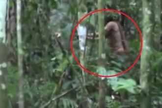 Ultimul supraviețuitor al unui trib izolat din Amazon, surprins într-o filmare. VIDEO