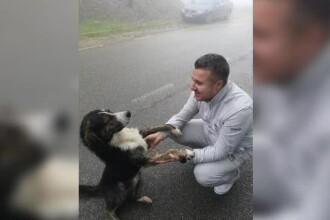 Câinele care a salvat un biciclist rănit pe munte a fost adoptat de vicepreședintele CJ Caraș Severin